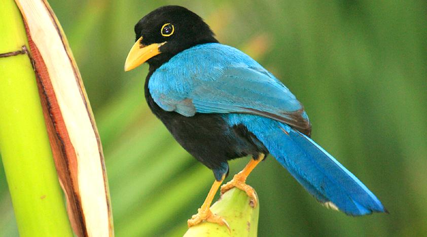 Mayan Jungle Bird Watching Tour in Cancun from $200 - Peek
